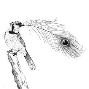 Le geai paré des plumes du paon